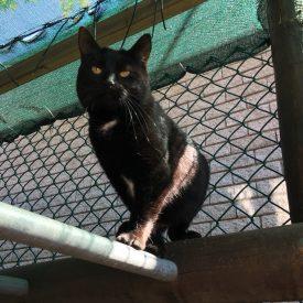 small black female cat