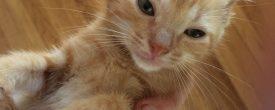 Kittens, kittens, and more kittens!