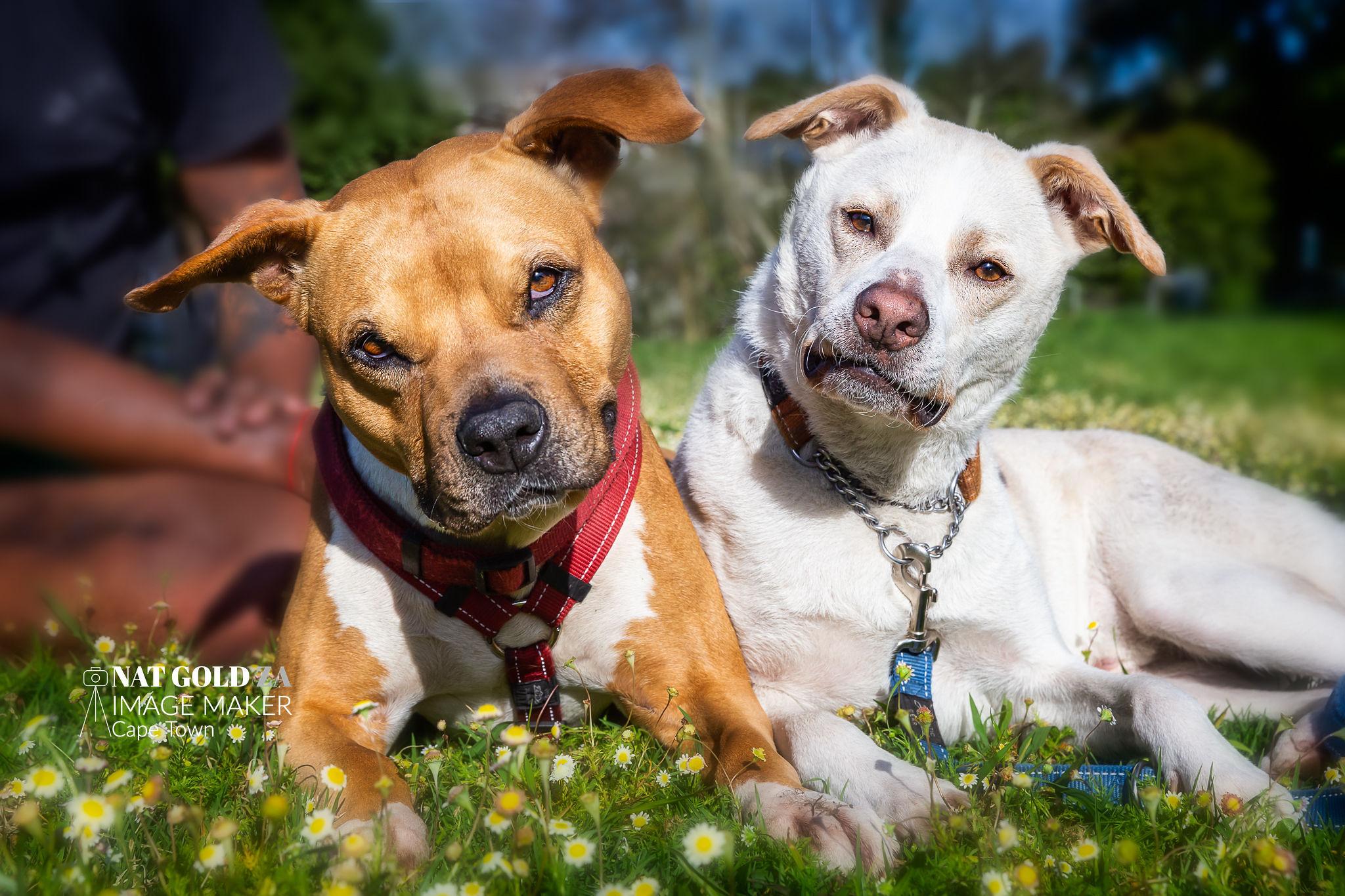 NatGoldZA_Plumpets_dogs-37